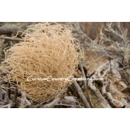 Giant Western Tumbleweed