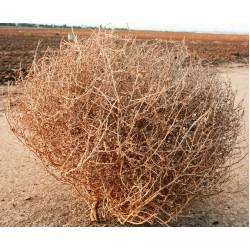 Ginormous Tumbleweed