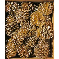 Gold Craft Ponderosa Pinecones