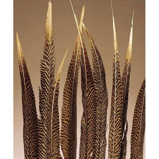 Golden Pheasant Feathers Natural