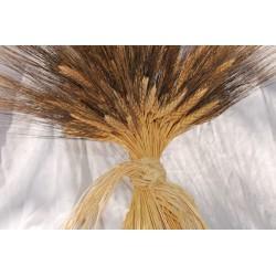 Large Dried Blackbeard Wheat Bunch