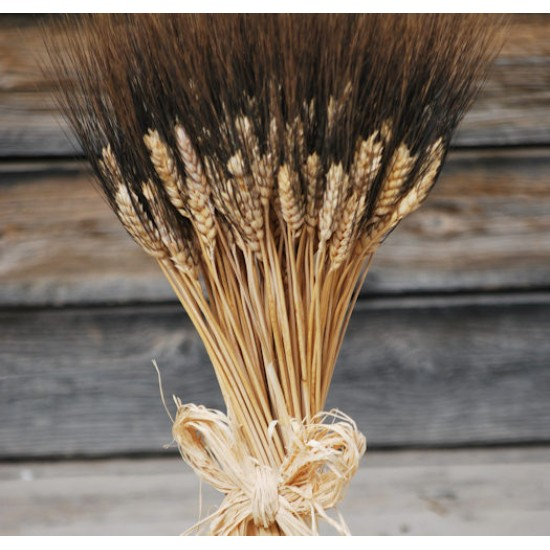 Large Dried Blackbeard Wheat Bunch