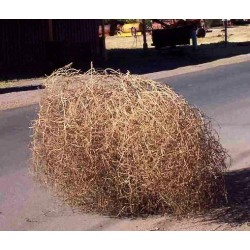 Large Country Tumbleweed