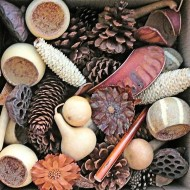 Pine Cones & Dried Pods