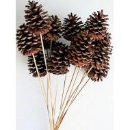 Natural Stemmed Ponderosa Pine Cones