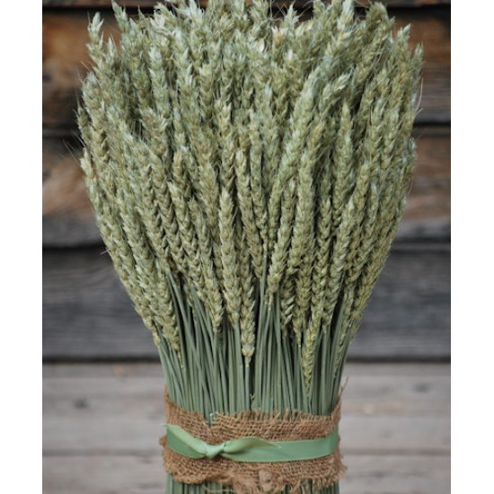 Vertical Beardless Wheat Bundle