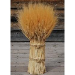 Blond Vertical Wheat Cone