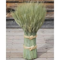 Green Bearded Vertical Wheat Cone