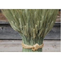 Green Bearded Vertical Wheat Cone
