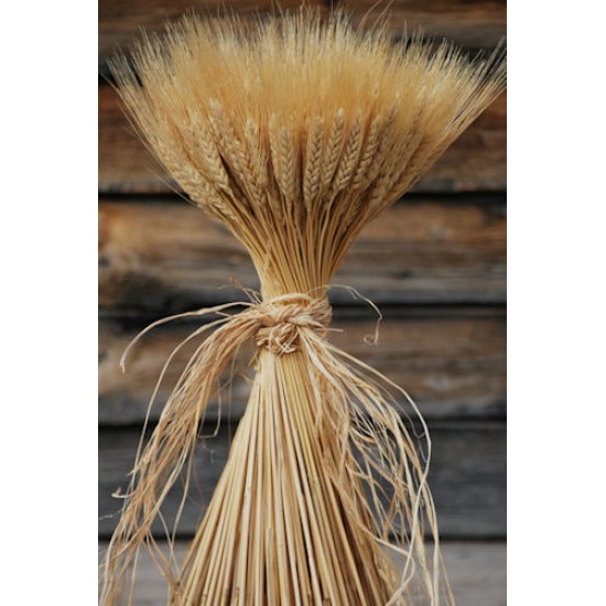 Large Dried Wheat Bunches