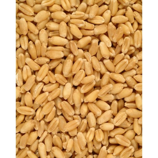 Wheat Kernels (Grain Kernels) Loose Wheat