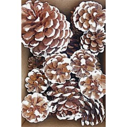 White Tipped Pine Cone Assorted Box