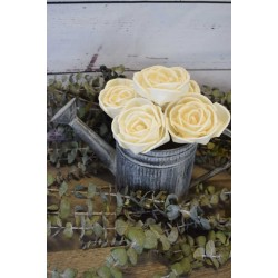 Wood Freeland Rose