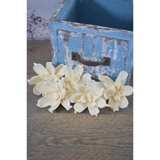 Sola Gardenia Flower