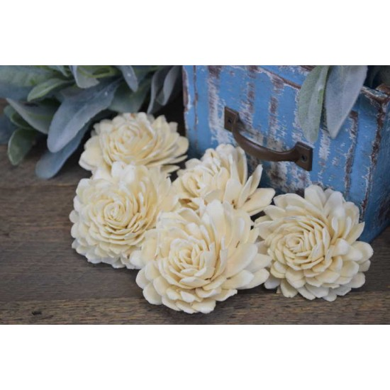 Sola White Beauti Chip Rose