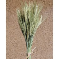 Green Bearded Wheat Bundle