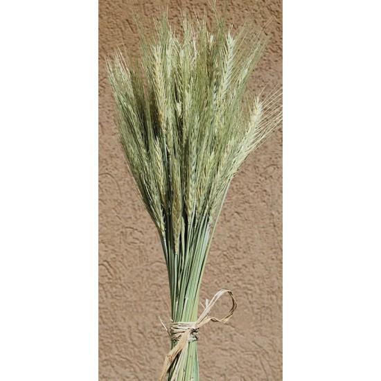 Green Bearded Wheat Bundle