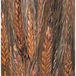Dyed Blackbeard Wheat Bunch - 8oz
