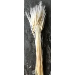 Triticum Bleached Wheat Bundle - 8oz bunch
