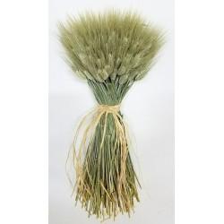 Large Dried Club Wheat Bunch - Green 1lb bunch