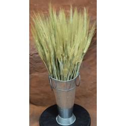 Dried Six Row Barley