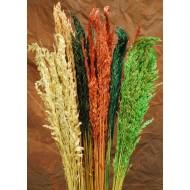 Dried Wild Oats - Decorative