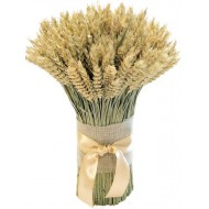 Green Beardless Wheat Cone Bundle -- 3LB