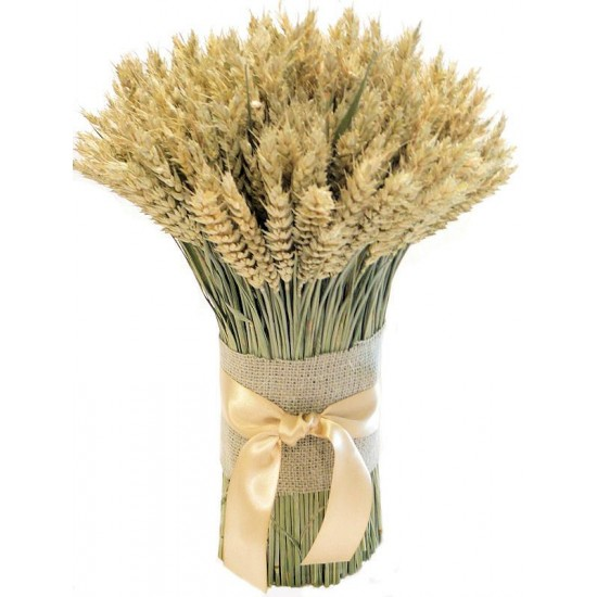 Green Beardless Wheat Cone Bundle -- 3LB