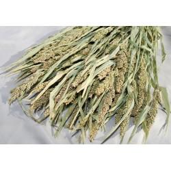 Decorative Mini Millet