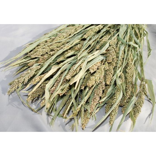 Decorative Mini Millet