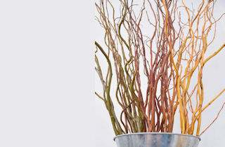 <s>Beautiful Dried Branches</s> Large Decorative Bundles